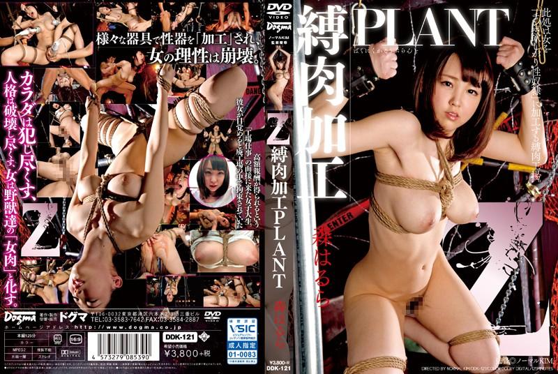 |DDK-121| Bound Flesh PLANT Z  Harura Mori humiliation featured actress training confinement